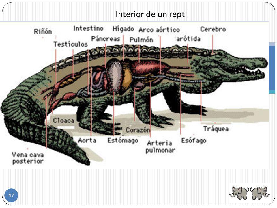 Interior de un reptil