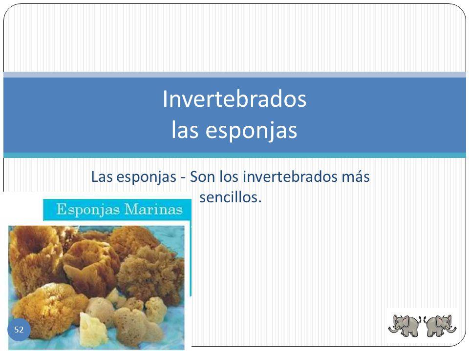 Invertebrados las esponjas