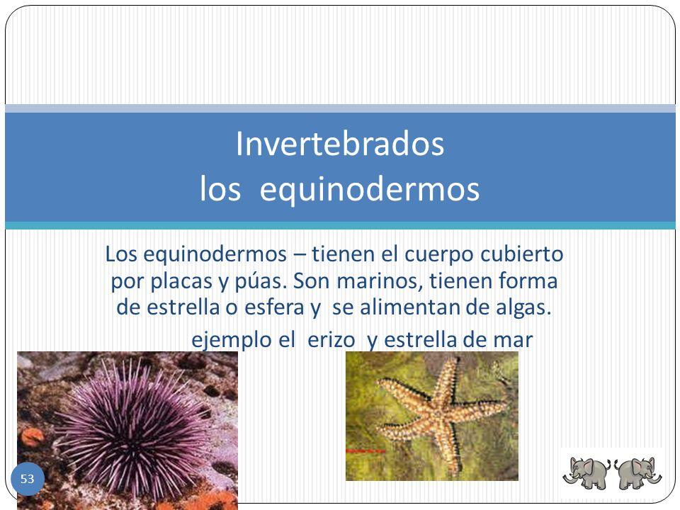 Invertebrados los equinodermos