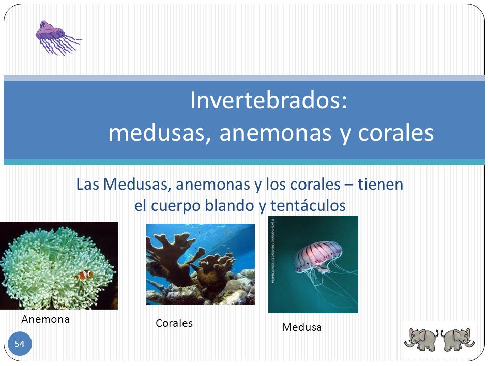 Invertebrados: medusas, anemonas y corales