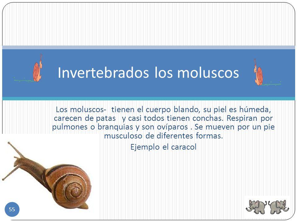 Invertebrados los moluscos