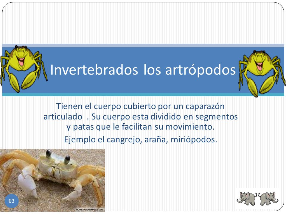 Invertebrados los artrópodos