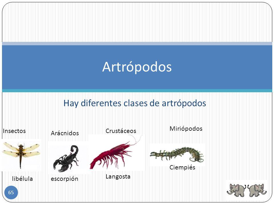 Hay diferentes clases de artrópodos
