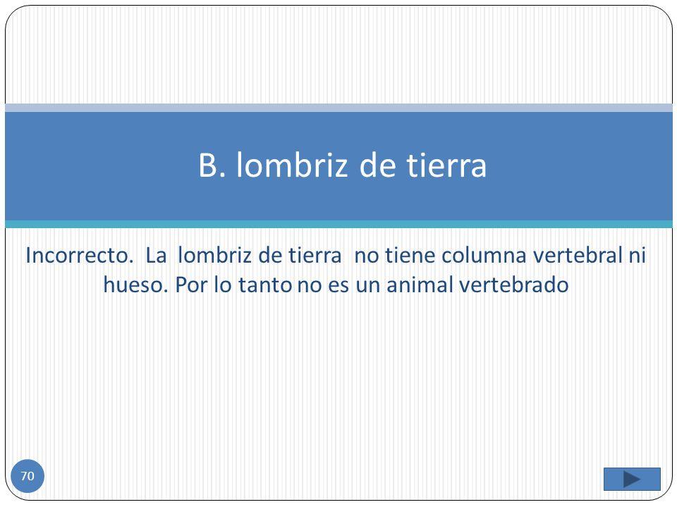 B. lombriz de tierra Incorrecto. La lombriz de tierra no tiene columna vertebral ni hueso.