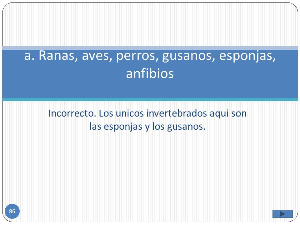 a. Ranas, aves, perros, gusanos, esponjas, anfibios