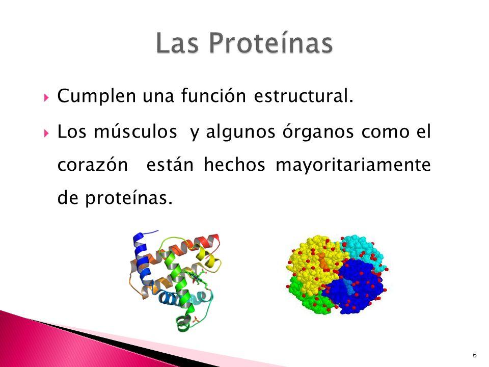 Las Proteínas Cumplen una función estructural.