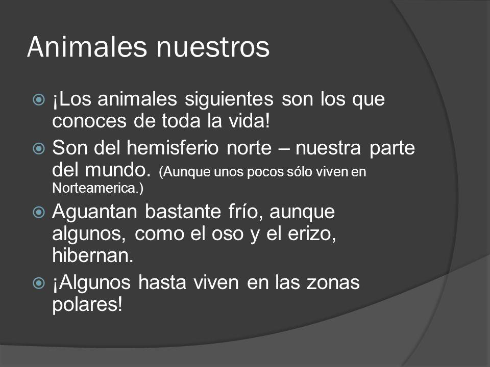Animales nuestros ¡Los animales siguientes son los que conoces de toda la vida!