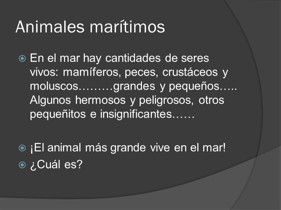 Animales marítimos