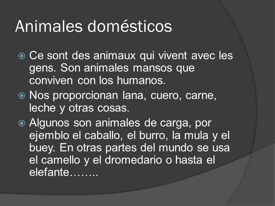 Animales domésticos Ce sont des animaux qui vivent avec les gens. Son animales mansos que conviven con los humanos.