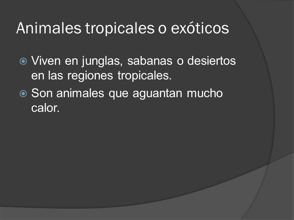 Animales tropicales o exóticos