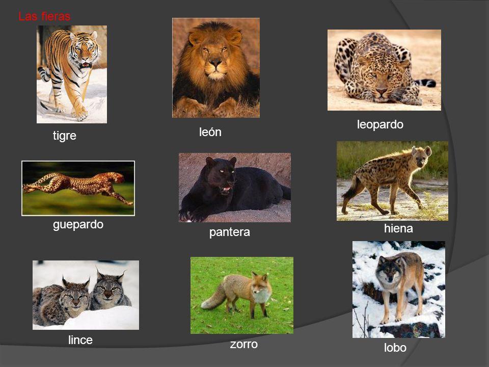Las fieras leopardo león tigre guepardo hiena pantera lince zorro lobo
