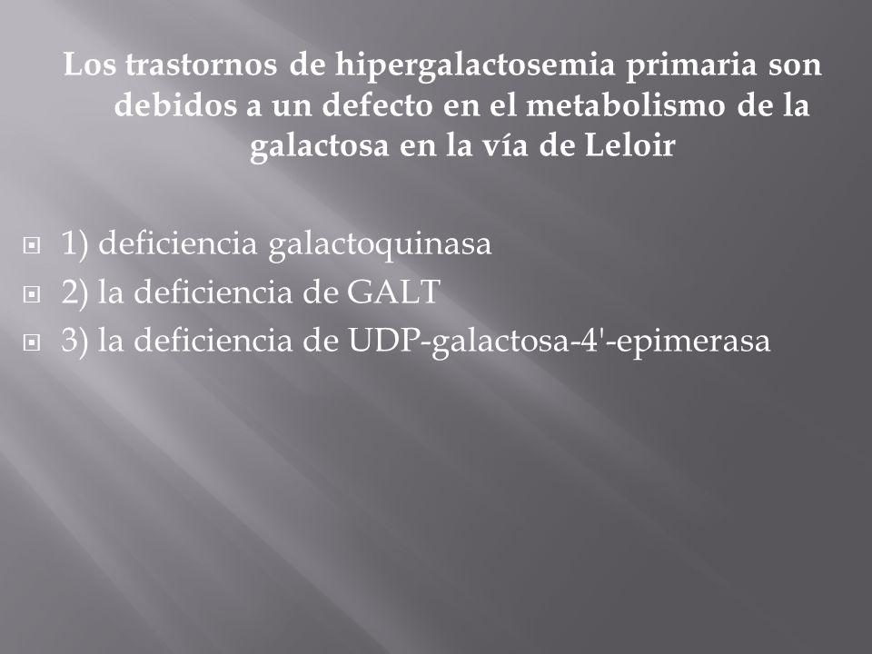 Los trastornos de hipergalactosemia primaria son debidos a un defecto en el metabolismo de la galactosa en la vía de Leloir