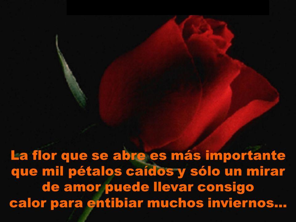 La flor que se abre es más importante