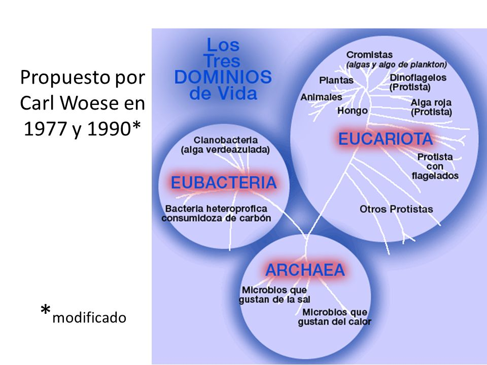 Propuesto por Carl Woese en 1977 y 1990* *modificado