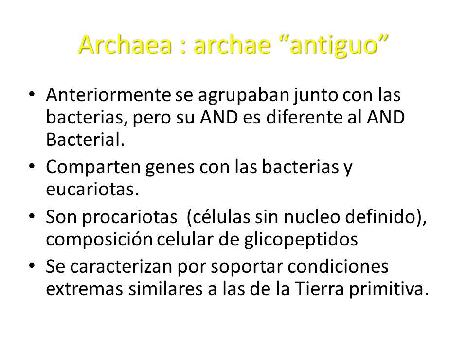Archaea : archae antiguo