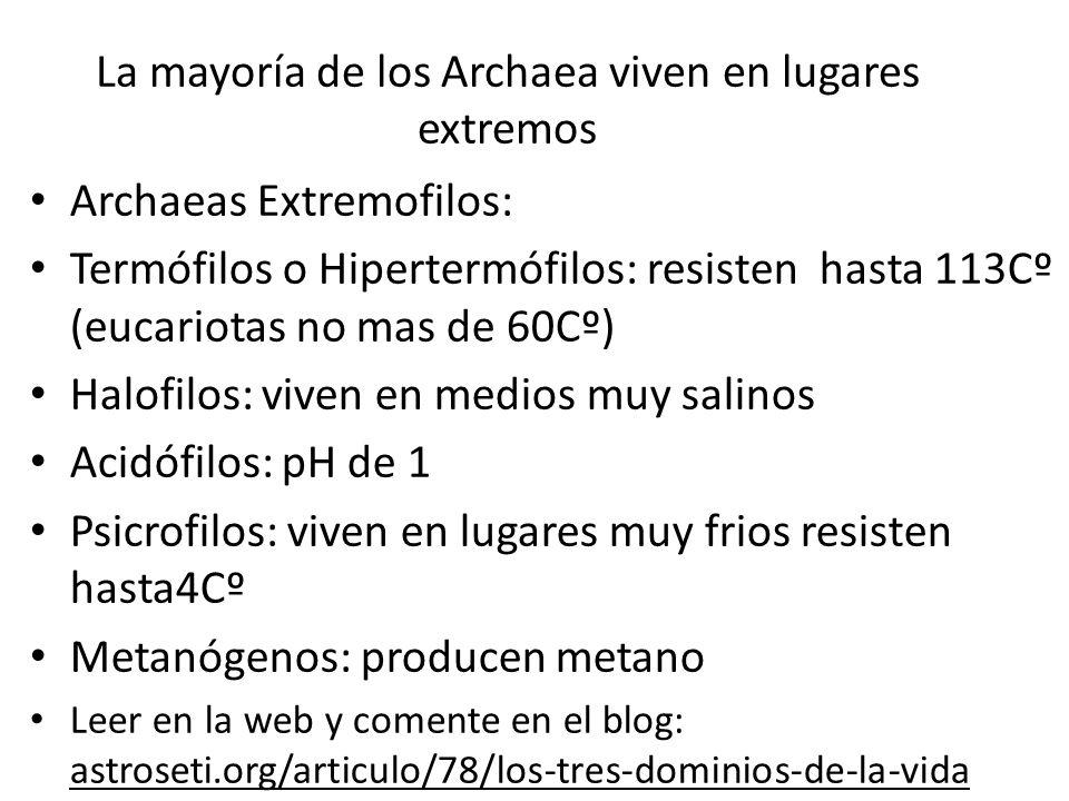 La mayoría de los Archaea viven en lugares extremos