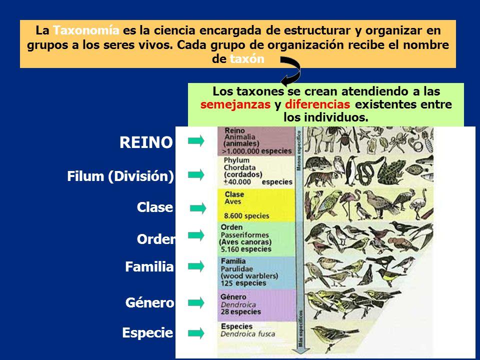 REINO Filum (División) Clase Orden Familia Género Especie