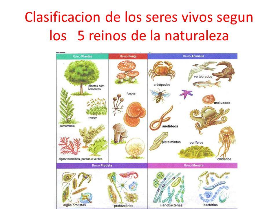Clasificacion de los seres vivos segun los 5 reinos de la naturaleza
