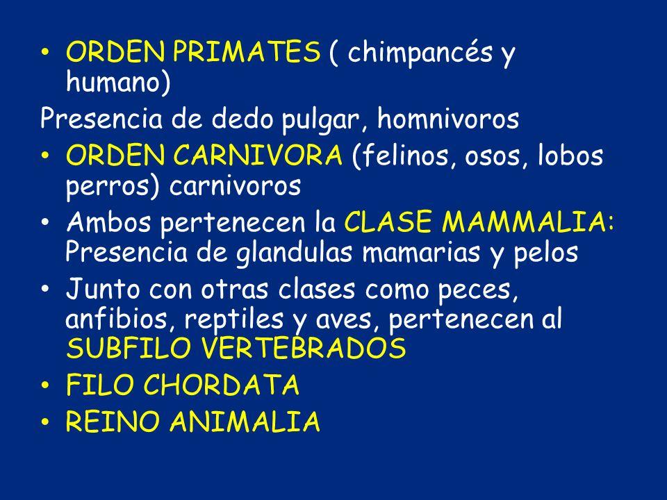 ORDEN PRIMATES ( chimpancés y humano)