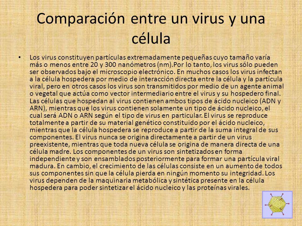 Comparación entre un virus y una célula