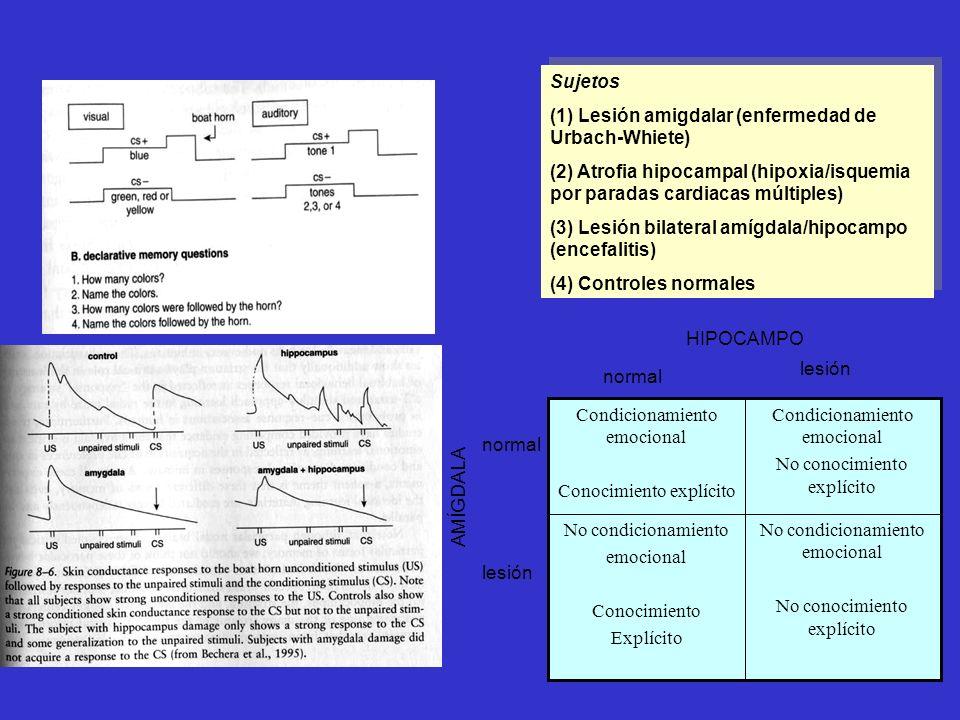 (1) Lesión amigdalar (enfermedad de Urbach-Whiete)