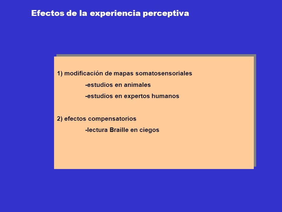 Efectos de la experiencia perceptiva