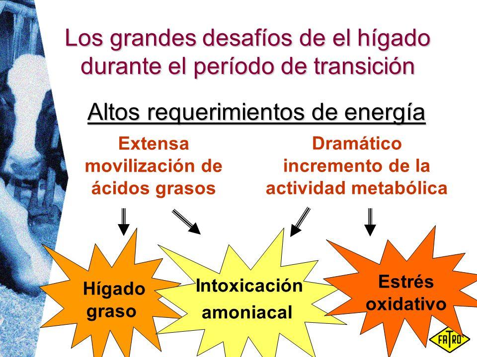 Los grandes desafíos de el hígado durante el período de transición