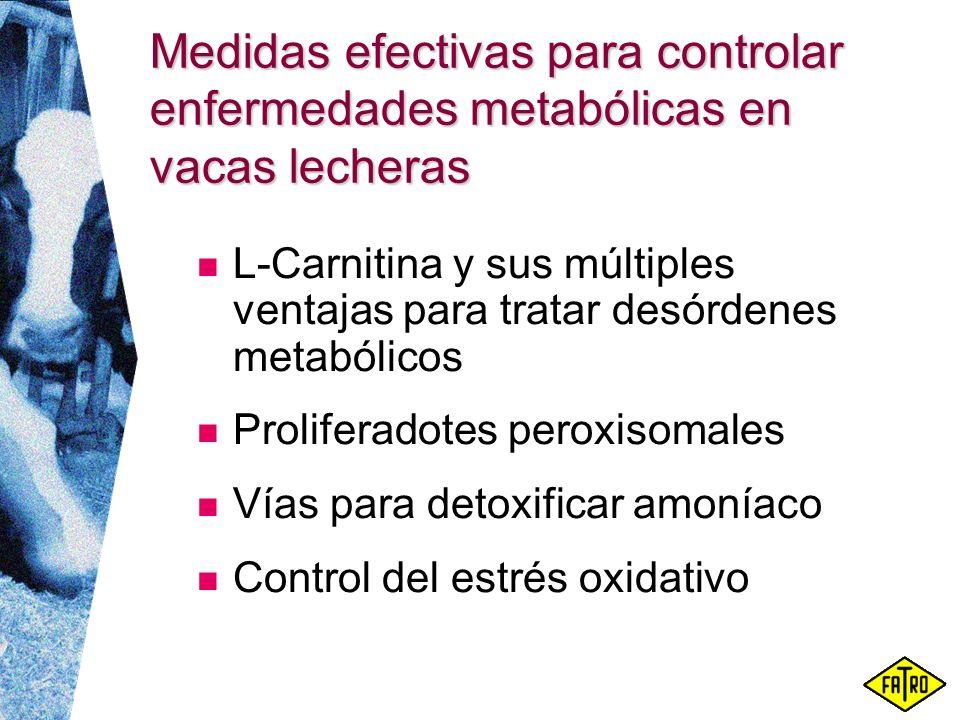 Medidas efectivas para controlar enfermedades metabólicas en vacas lecheras
