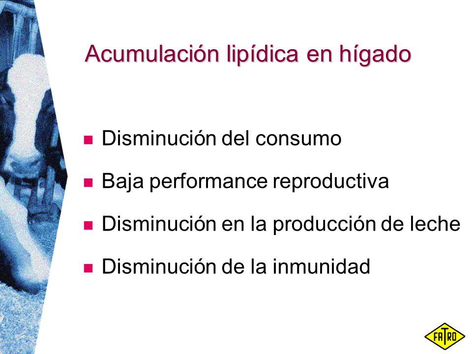 Acumulación lipídica en hígado