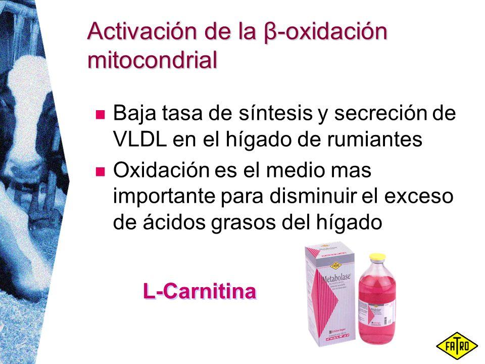 Activación de la β-oxidación mitocondrial