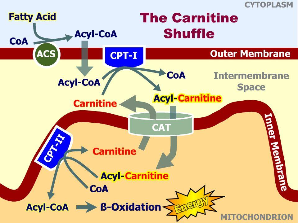 The Carnitine Shuffle Acyl CoA synthetase