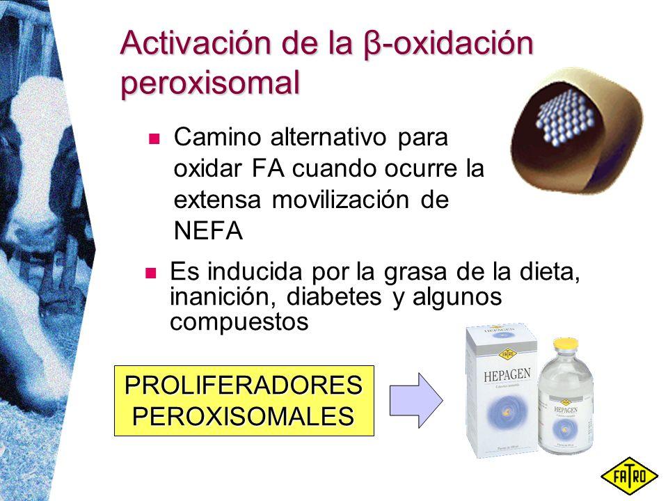 Activación de la β-oxidación peroxisomal