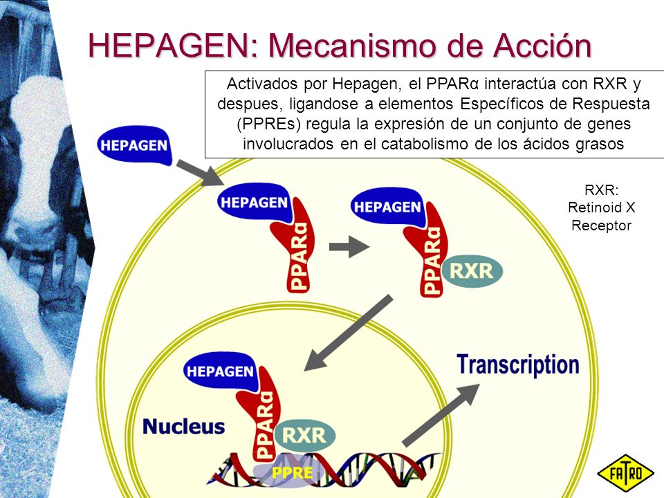 HEPAGEN: Mecanismo de Acción