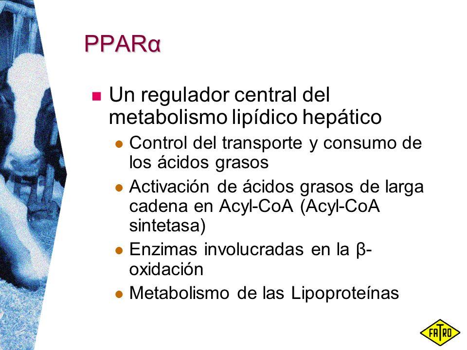 PPARα Un regulador central del metabolismo lipídico hepático