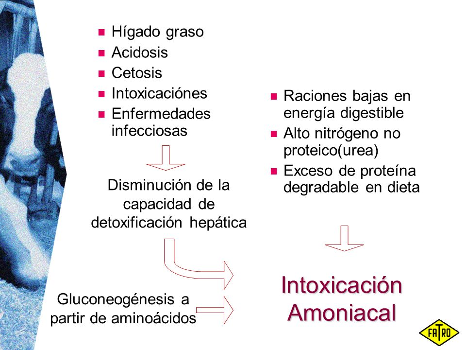Intoxicación Amoniacal