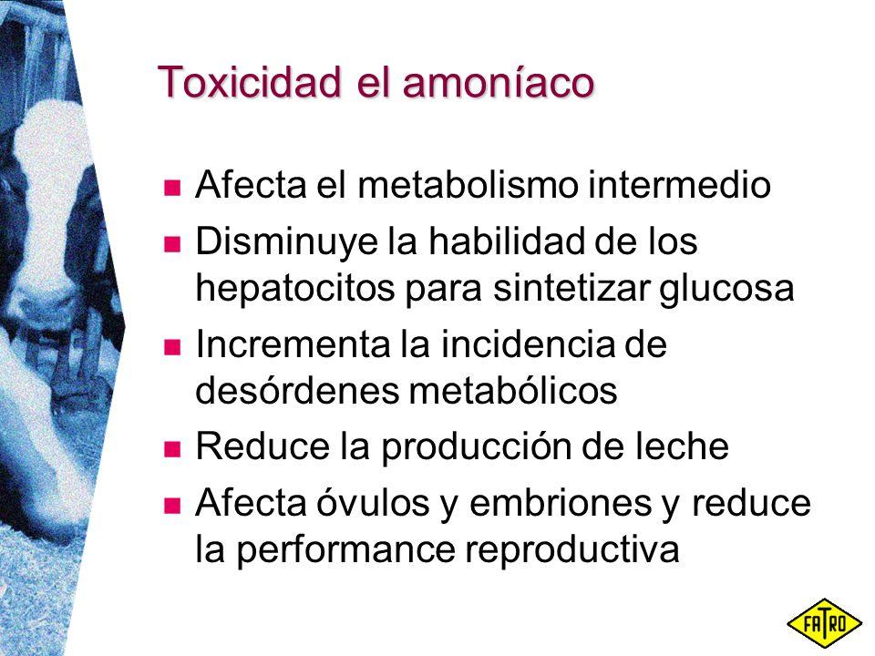 Toxicidad el amoníaco Afecta el metabolismo intermedio