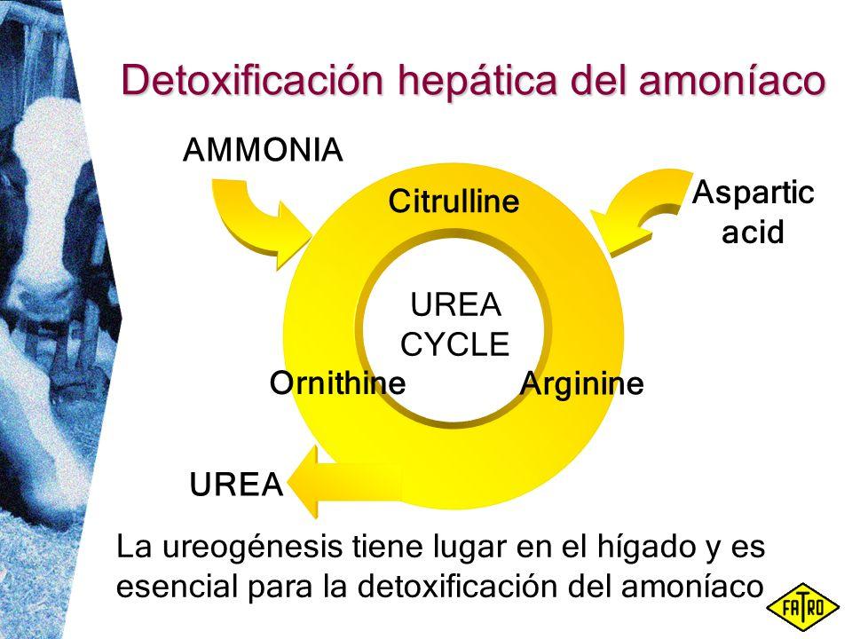 Detoxificación hepática del amoníaco