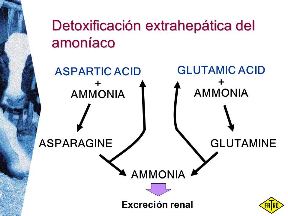 Detoxificación extrahepática del amoníaco