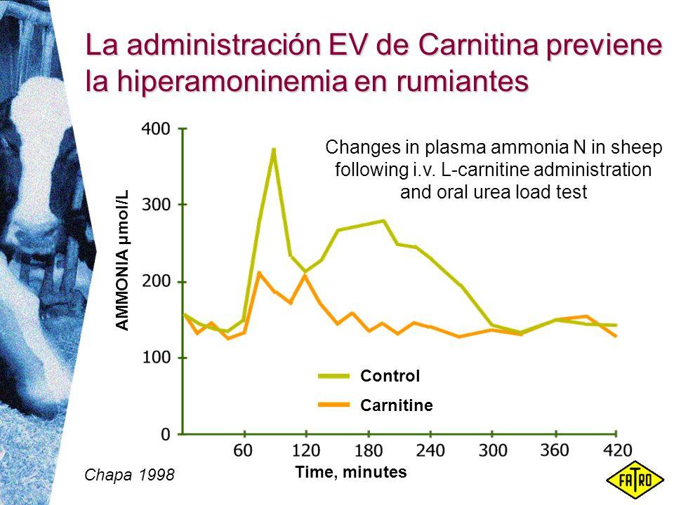 La administración EV de Carnitina previene la hiperamoninemia en rumiantes