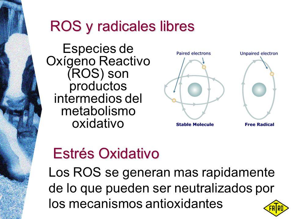 ROS y radicales libres Estrés Oxidativo