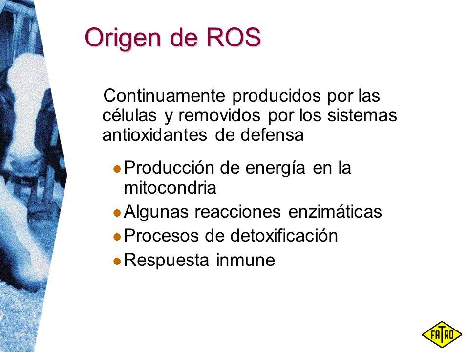 Origen de ROS Continuamente producidos por las células y removidos por los sistemas antioxidantes de defensa.