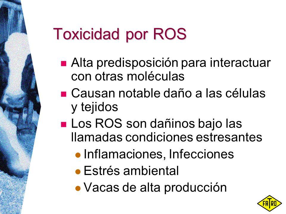 Toxicidad por ROS Alta predisposición para interactuar con otras moléculas. Causan notable daño a las células y tejidos.