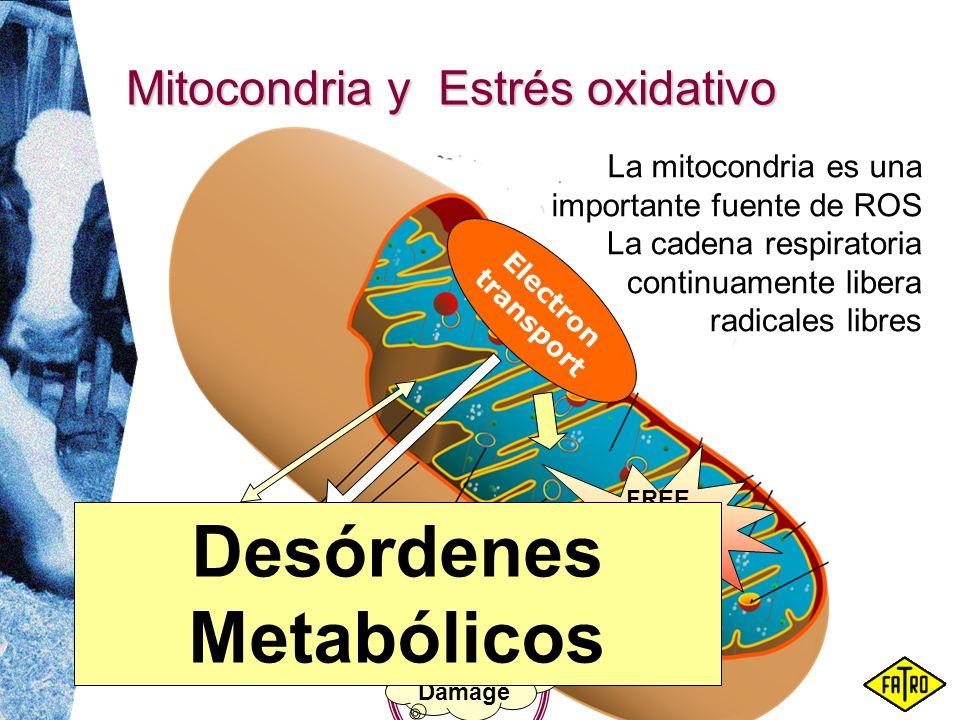 Mitocondria y Estrés oxidativo