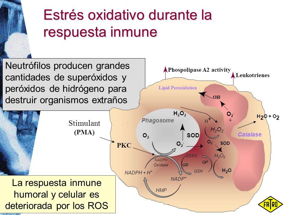 Estrés oxidativo durante la respuesta inmune