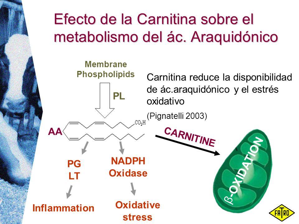 Efecto de la Carnitina sobre el metabolismo del ác. Araquidónico