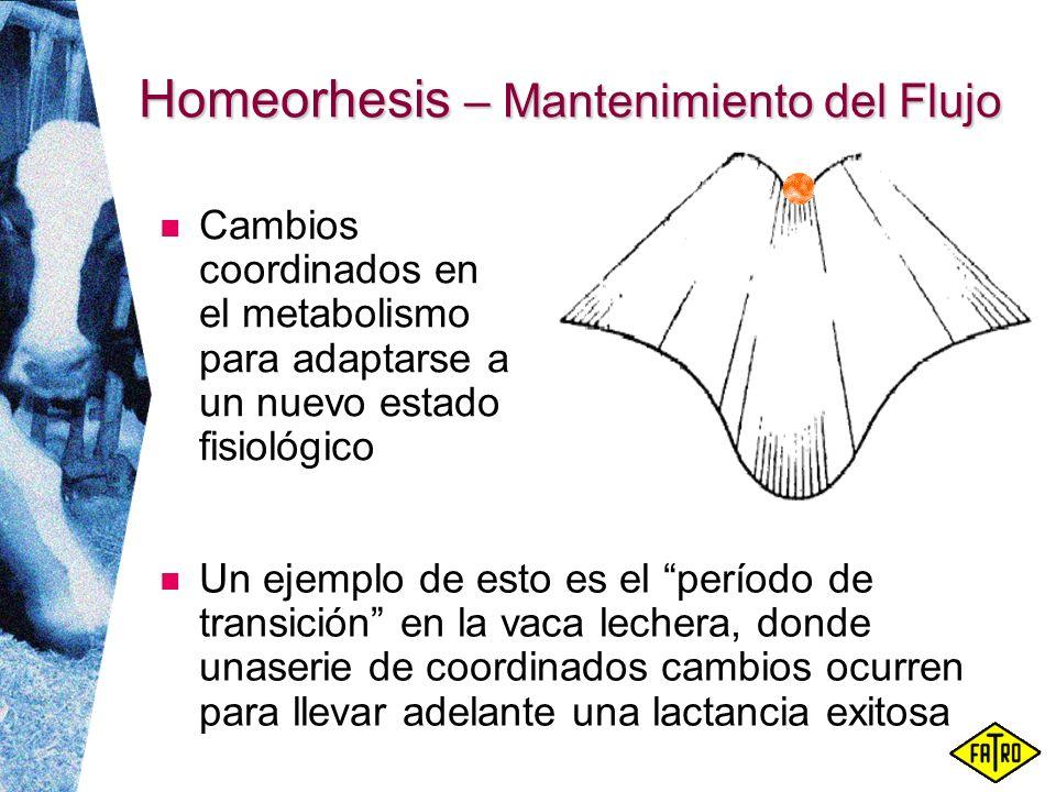 Homeorhesis – Mantenimiento del Flujo