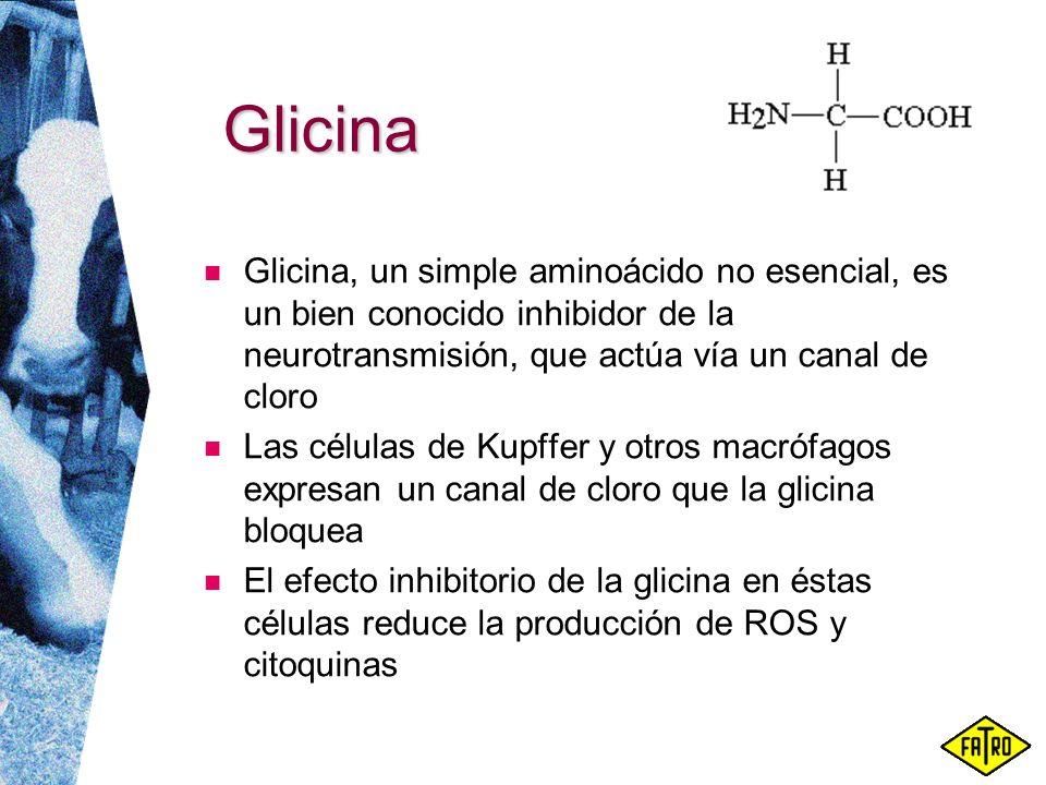 Glicina Glicina, un simple aminoácido no esencial, es un bien conocido inhibidor de la neurotransmisión, que actúa vía un canal de cloro.