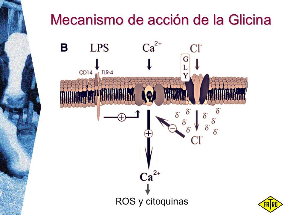Mecanismo de acción de la Glicina