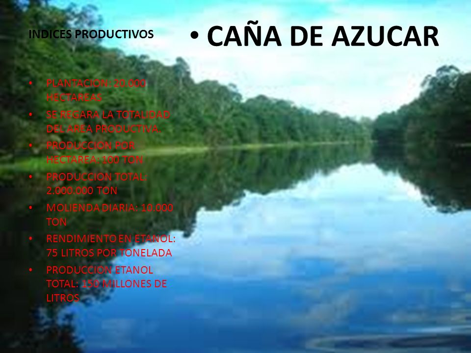 CAÑA DE AZUCAR INDICES PRODUCTIVOS PLANTACION: 20.000 HECTAREAS