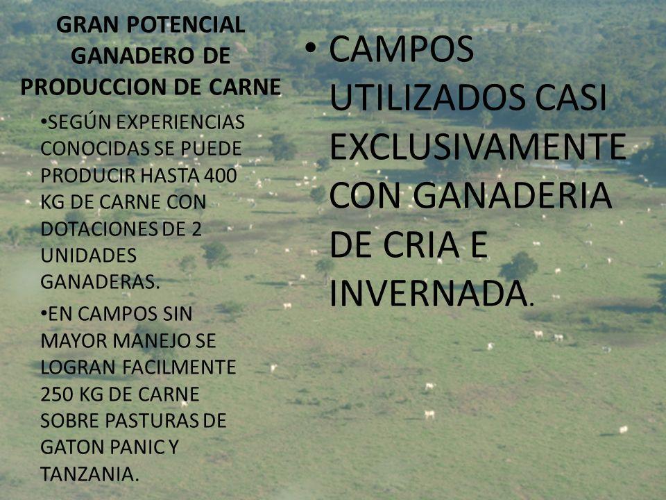 GRAN POTENCIAL GANADERO DE PRODUCCION DE CARNE